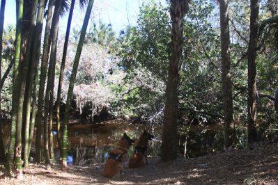 Bambusweg 8456