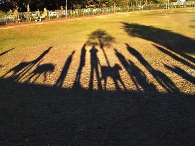 Hundepark Schatten
