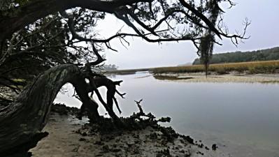 Little Talbot Island 1429 kl