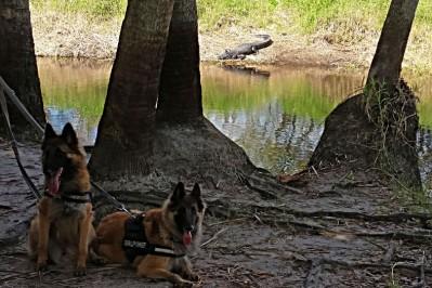 Myakka River Hunde Ali